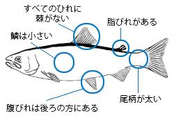 魚類図鑑/魚の調べ方